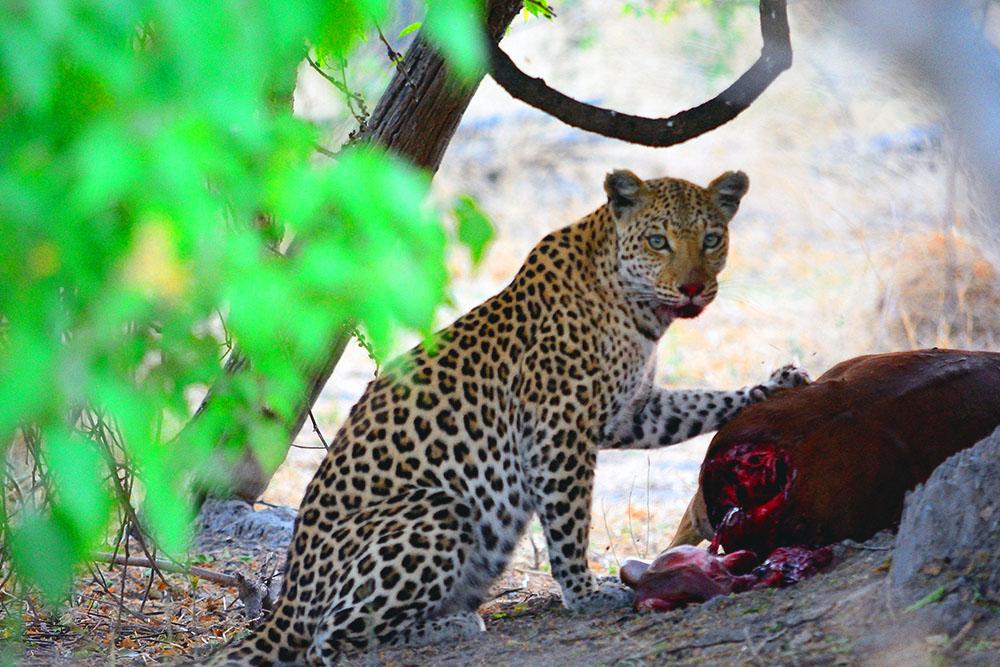 riserva di moremi botswana