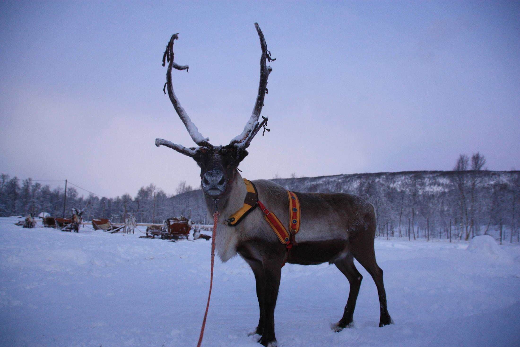 lapponia finlandese