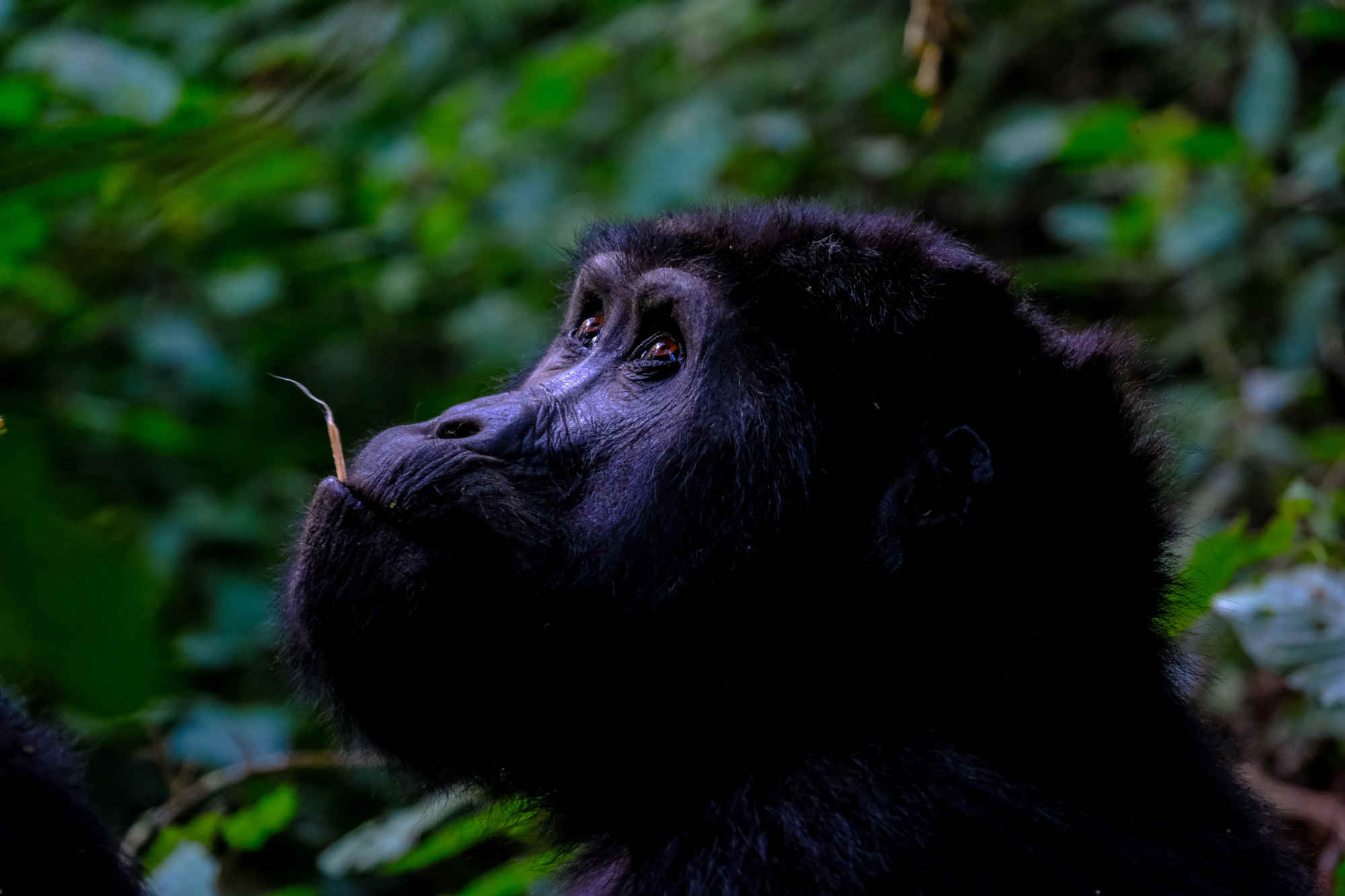 uganda viaggio