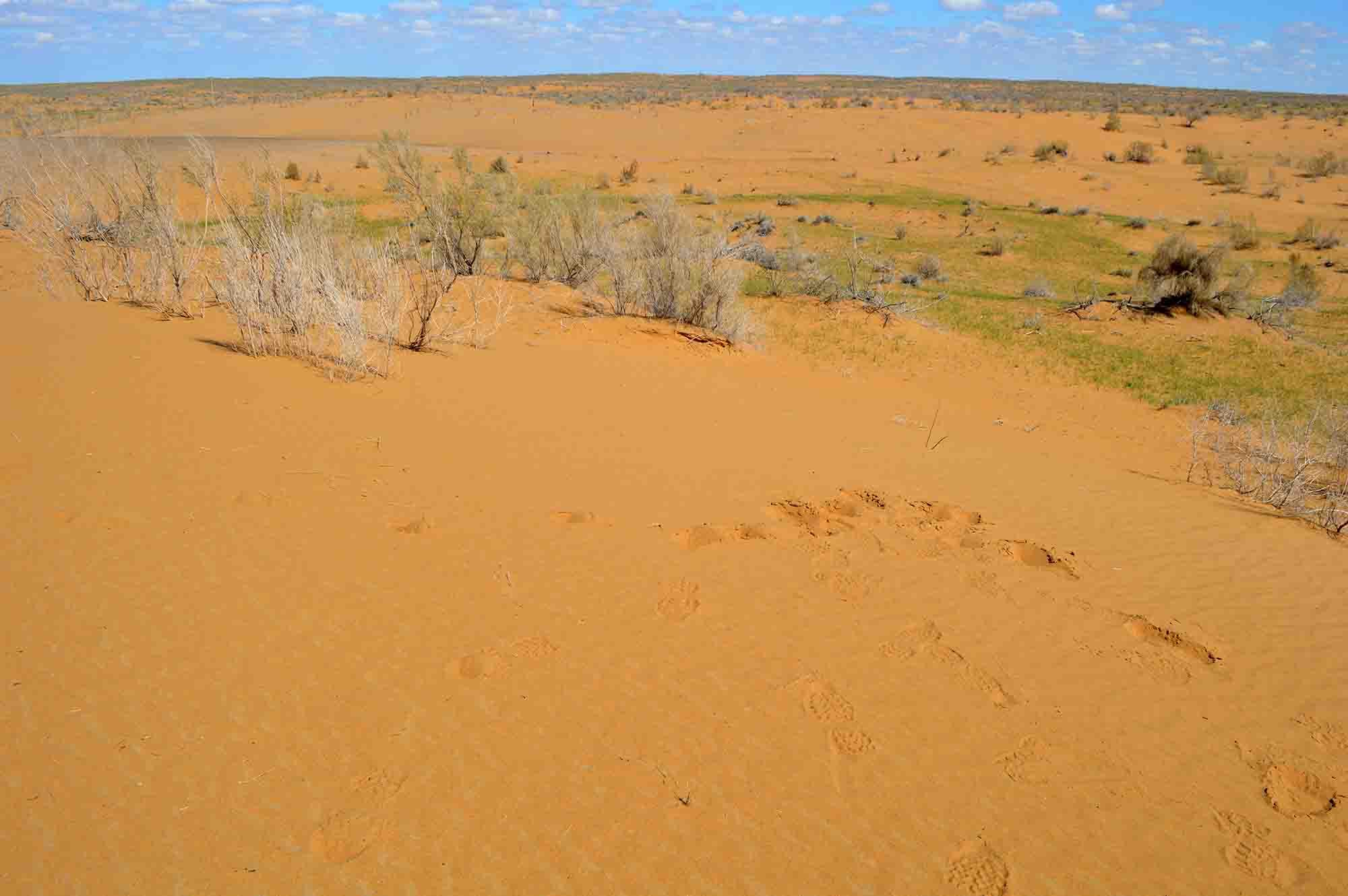 deserto kyzylkum
