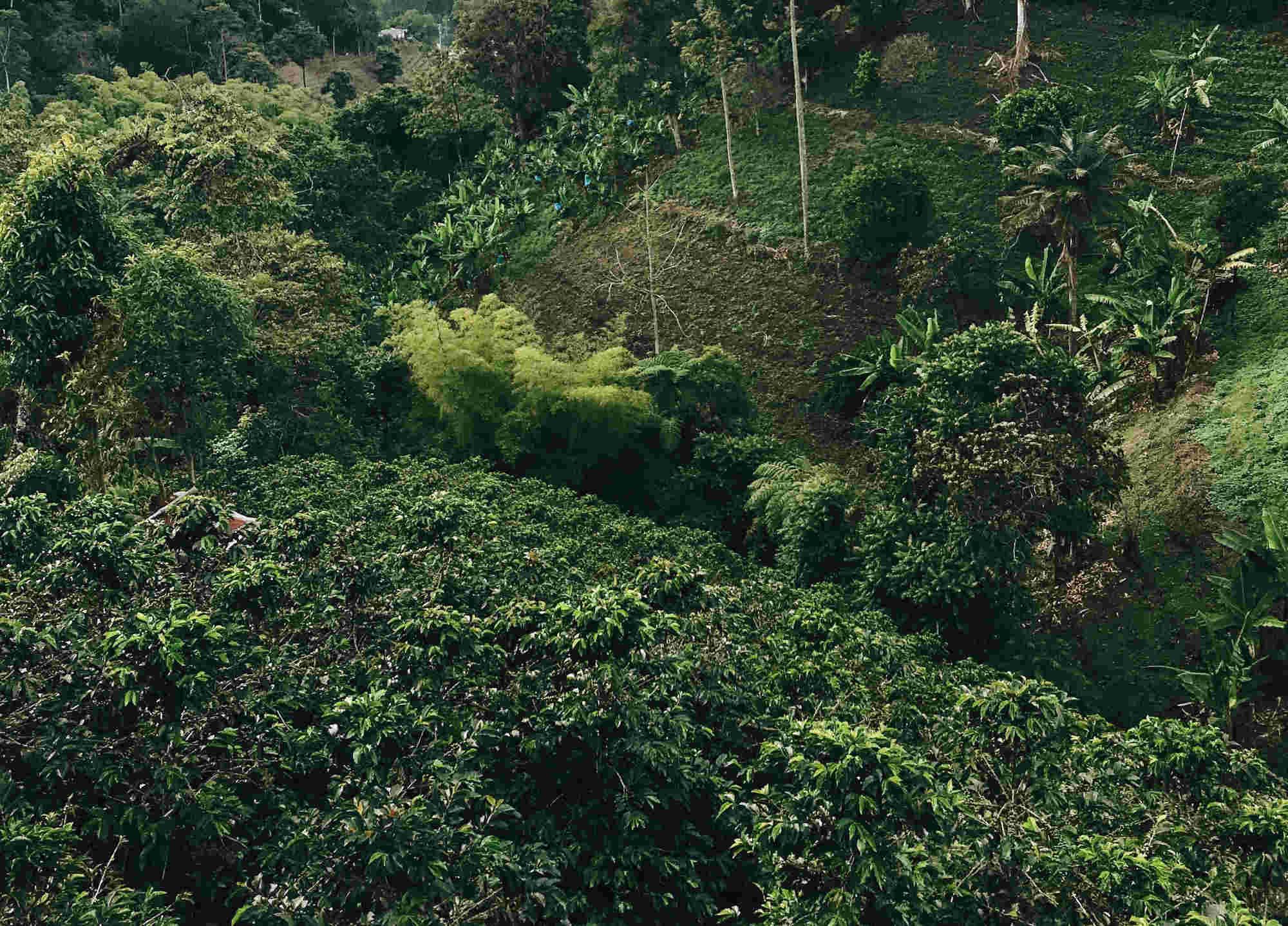 viaggio cartagena colombia smeraldo